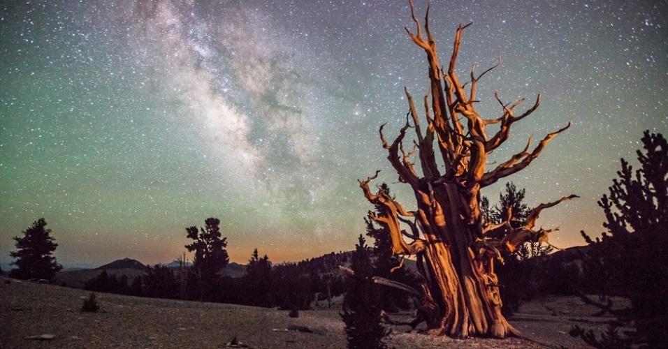 Com apenas 13 anos, o americano Thomas Sullivan compôs esta imagem da Via Láctea como pano de fundo do cenário desértico da Califórnia. A árvore em primeiro plano tem mais de 4 mil anos. A foto ganhou menção honrosa na categoria Fotógrafos Jovens
