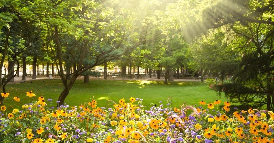 Primavera, flor, jardim