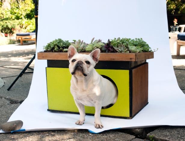 A ecocasinha do bulldog francês Hugo é moderna e tem telhado verde, mas o cãozinho não liga muito pro canil - Drew Kelly/The New York Times