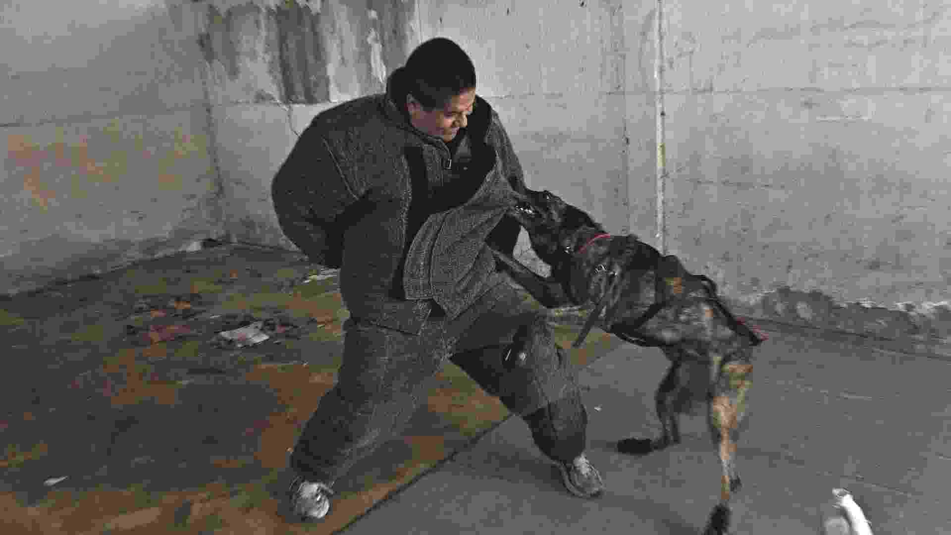 30.set.2012 - Cães da polícia do Rio aprendem técnicas francesas de treinamento em intercâmbio promovido pela PM - Júlio Guimarães/UOL