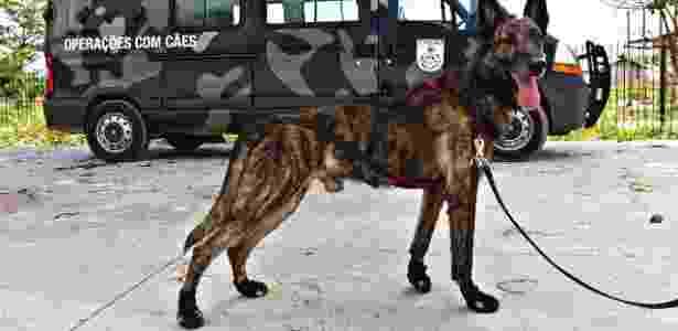 Anthrax usa botas especiais que devem ajudar no desempenho dos animais em terrenos escorregadios - Júlio Guimarães/UOL