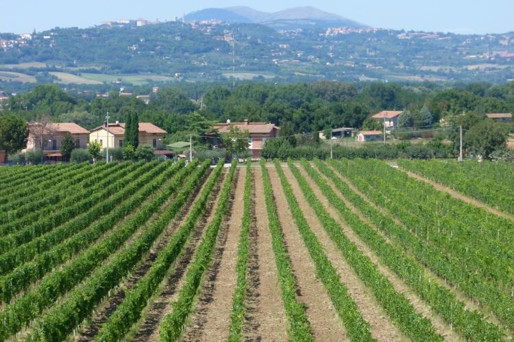 Vinícolas fazem parte das paisagens rurais que cercam Assis, na região italiana da Umbria
