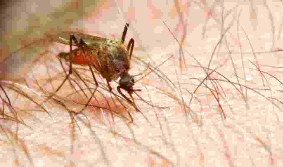 05.out.2012 - A fêmea do mosquito Anopheles mata mais de um milhão de pessoas por ano. O inseto é o mais letal do mundo animal porque é transmissor da malária, doença que mais gera problemas sócio-econômicos no mundo e é considerado um problema de saúde pública em mais de 90 países - cerca de 2,4 bilhões de pessoas (40% da população mundial) convivem, ainda hoje, com os risco de contágio. No Brasil, principalmente na região amazônica, até 500 mil pessoas são infectadas por ano - Thinkstock/Getty Images