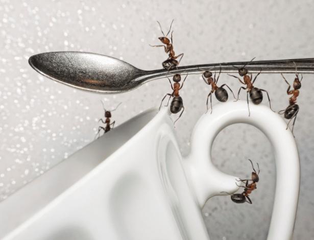 Formigas de cerca de 30 espécies podem infestar a casa e causar danos, inclusive, em eletrodomésticos - Getty Images