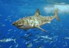 Peixes: Os primeiros vertebrados do planeta Terra - Terry Goss/Wikimedia Commons