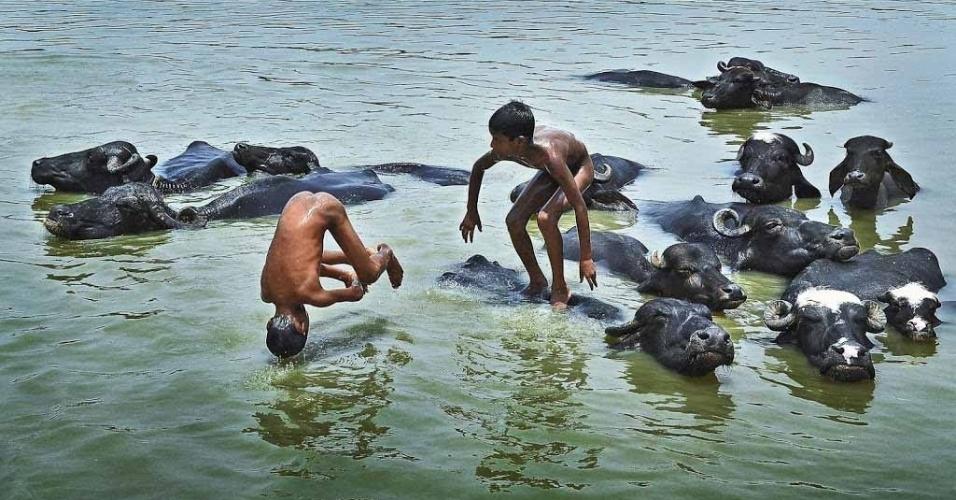 15.out.2012 - Darban Basak, da Índia, mostra a interação de crianças com búfalos em um rio
