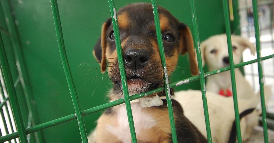 17.10.2012 - Cachorro é exposto em feira de adoção realizada pelo Centro de Controle de Zoonoses da Prefeitura de Osasco, cidade da Grande São Paulo
