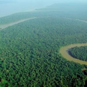 Maior extensão de floresta tropical da Terra, a floresta Amazônica é fonte de sobrevivência para diversas comunidades locais - lubasi/Wikimedia Commons