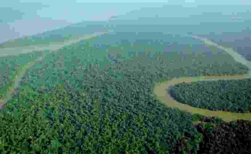 Maior extensão de floresta tropical da Terra, a Amazônia é rica em biodiversidade e um dos maiores depósitos de carbono do planeta. Sua exploração deve inspirar cuidados constantes, pois ela tem papel preponderante no equilíbrio do meio ambiente. Abrigo de inúmeras espécies animais e vegetais, a preservação da Amazônia é um dos fatores de maior contribuição para a manutenção da vida na Terra. - lubasi/Wikimedia Commons