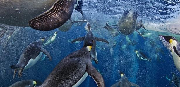 Esta foto de pinguins imperadores na Antártida foi a grande vencedora do concurso britânico Veolia Environment Wildlife Photographer of the Year - Paul Nicklen/Veolia Environment Wildlife Photographer of the Year