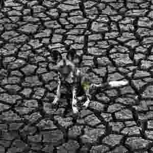 """O sul-africano Kim Wolhuter venceu na categoria de Espécies Ameaçadas. Ele passou mais de quatro anos filmando cachorros selvagens na Reserva Malilangwe, no Zimbábue. Ele conhece intimamente o grupo de animais. """"Eu viajei com eles, à pé, dentro da matilha, correndo com eles enquanto eles caçavam"""", ele conta.  - Kim Wolhuter/Veolia Environment Wildlife Photographer of the Year"""