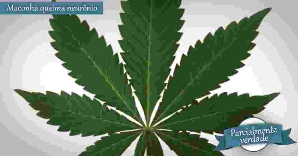 folha da cannabis, folha de maconha - Getty Images