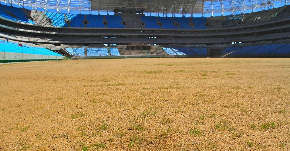 Gramado começa a brotar na Arena do Grêmio