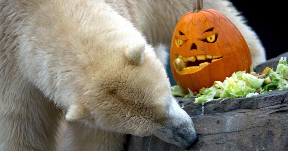 25.out.2012 - Urso polar Sprinter ganha uma abóbora decorada cheio de peixes e outras delícias no zoológico de Hanover, na Alemanha, em comemoração ao Dia das Bruxas