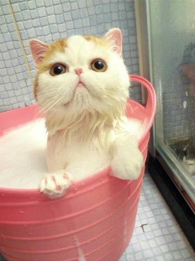 Banho de espuma é sempre mais legal. O gatinho da foto ficou com a pata todinha ensaboada