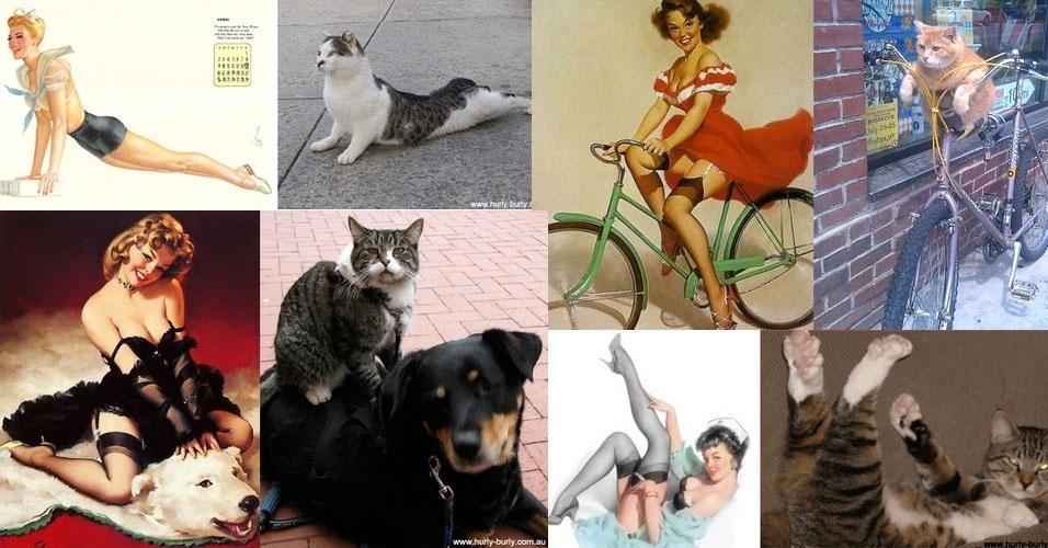 """O Tumblr """"Cats that look like pin-up girls"""" (Gatos que parecem garotas pin ups) reúne gatos em poses sensuais. O termo pin-up diz respeito a garotas consideradas símbolo sexual vestidas com roupas vintage como espartilhos e meias arrastão"""
