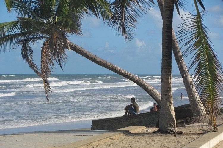 Na sombra do coqueiro, turista admira o mar em Abaís