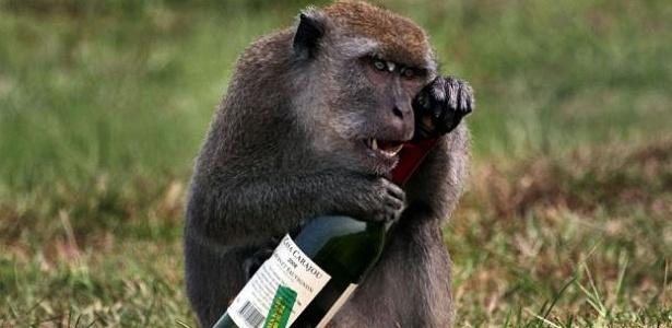 Macaco afoga as mágoas com vinho Cabernet Sauvignon safra 2008