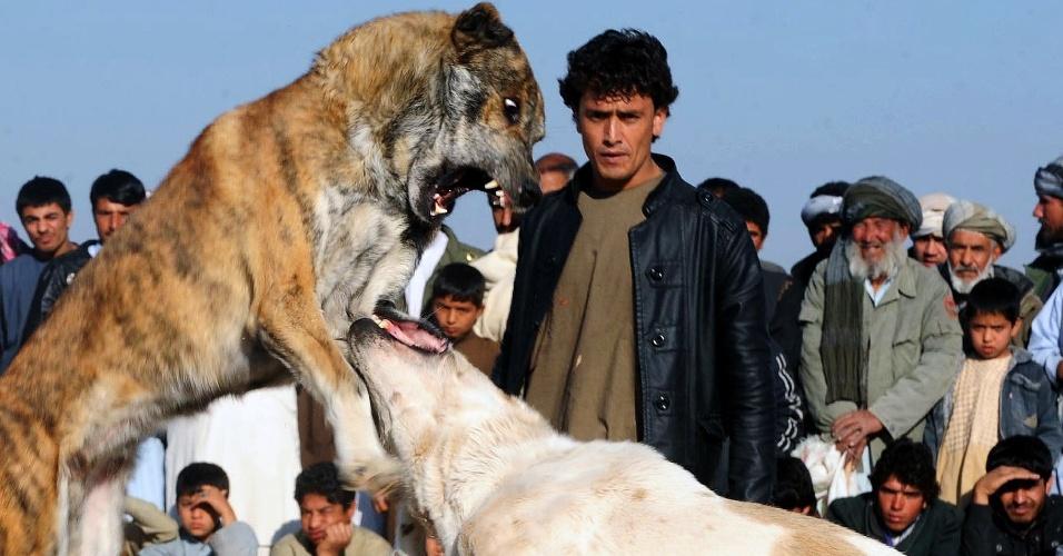 Treinador afegão observa o cachorro dele durante luta entre cães em Herat, no Afeganistão