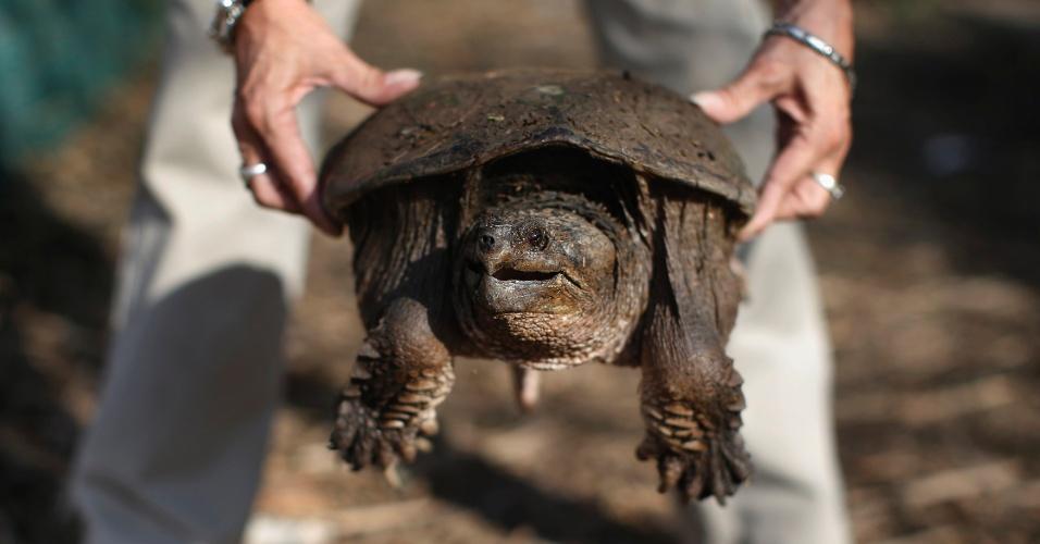 12.nov.2012 - Mulher segura uma tartaruga durante a limpeza de detritos causados pelo furacão Sandy, em Staten Island, Nova York, nesta segunda-feira (12)