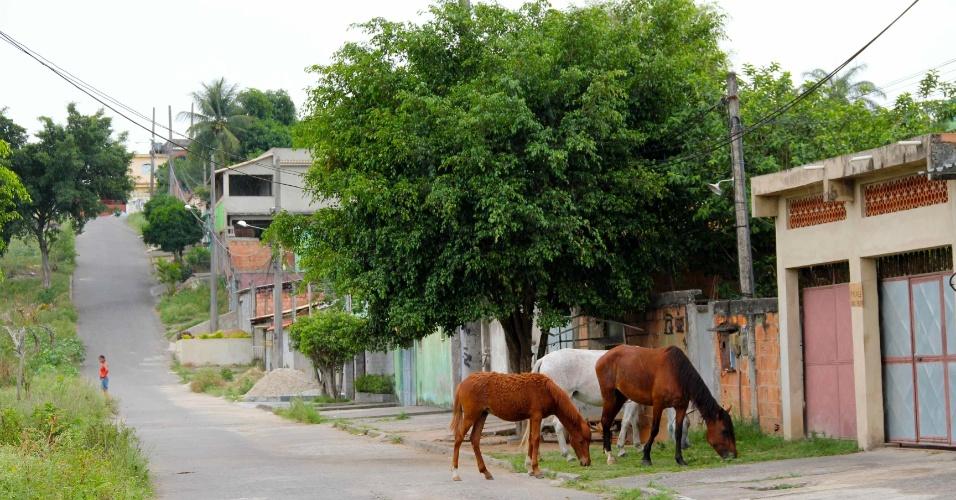 Cavalos pastam no Jardim Iguaçu, em Nova Iguaçu, local em que Emerson Sheik foi criado