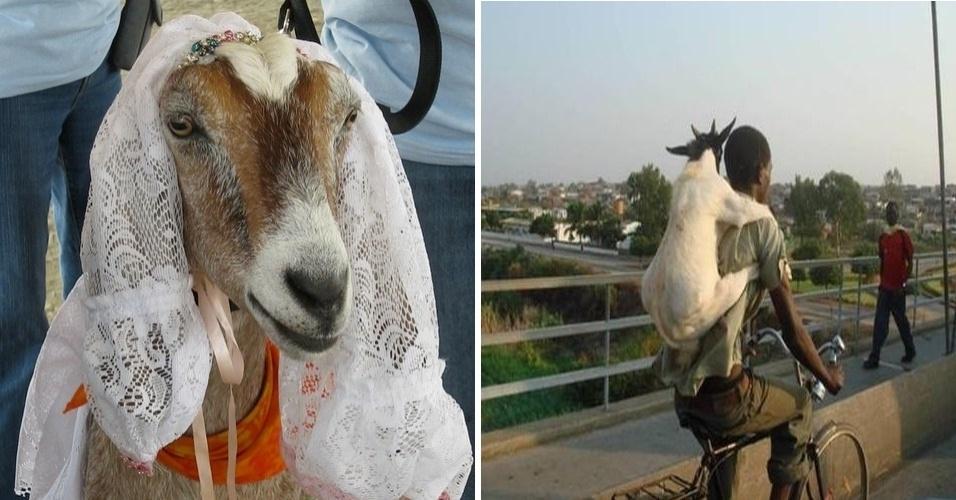 Reprodução/Cabras Pra Casar