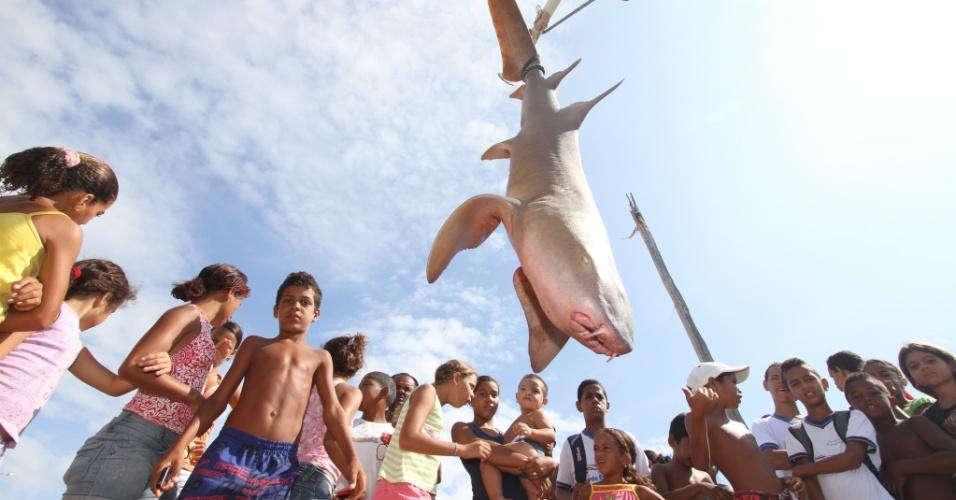 16.nov.2012 - Um tubarão lixa foi pescado na manhã desta sexta-feira (16) na praia Del Chifre, em Olinda, na Região Metropolitana do Recife. O animal media 1,80 metros de comprimento e pesava cerca de 80kg