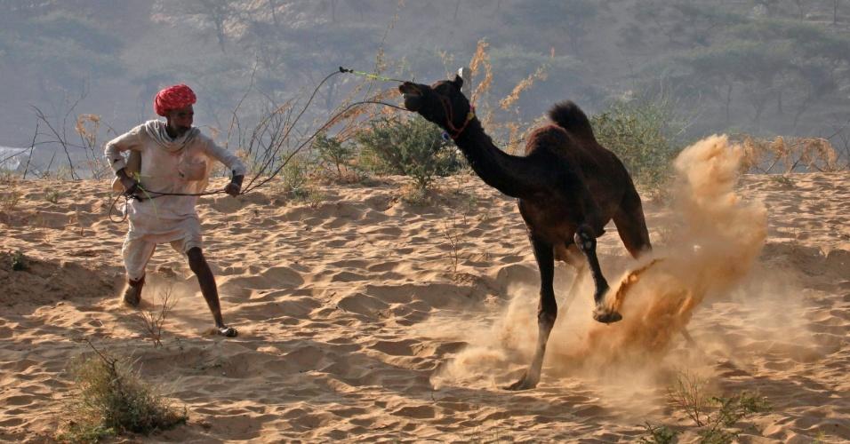 23.nov.2012 - Homem doma camelo no deserto de Rajasthan durante a feira de Pushkar, na Índia. Muitos turistas vão a Pushkar para o evento, que é popular no país. Milhares de animais, principalmente camelos, são levados para ser vendidos