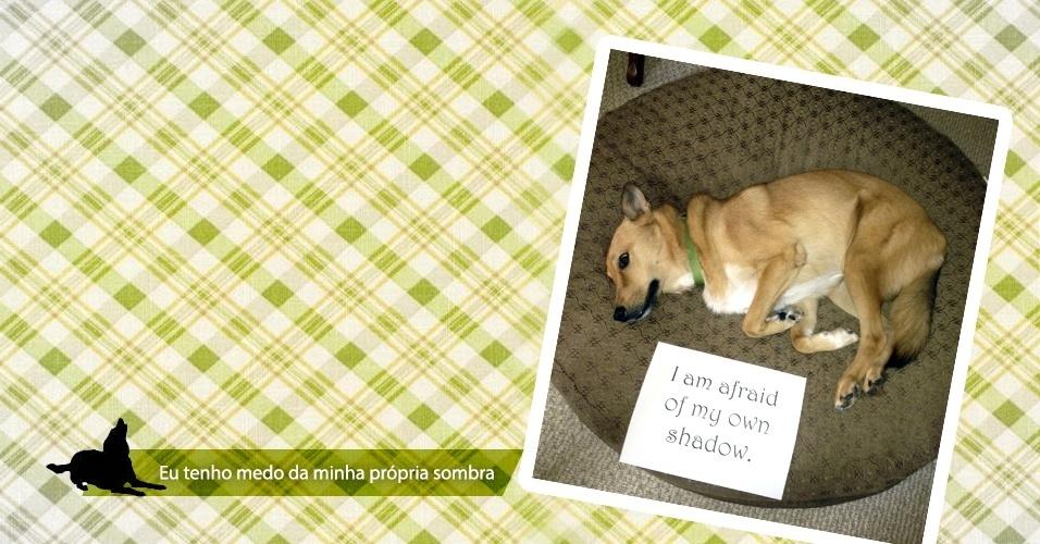 Imagem do site Dog Shaming