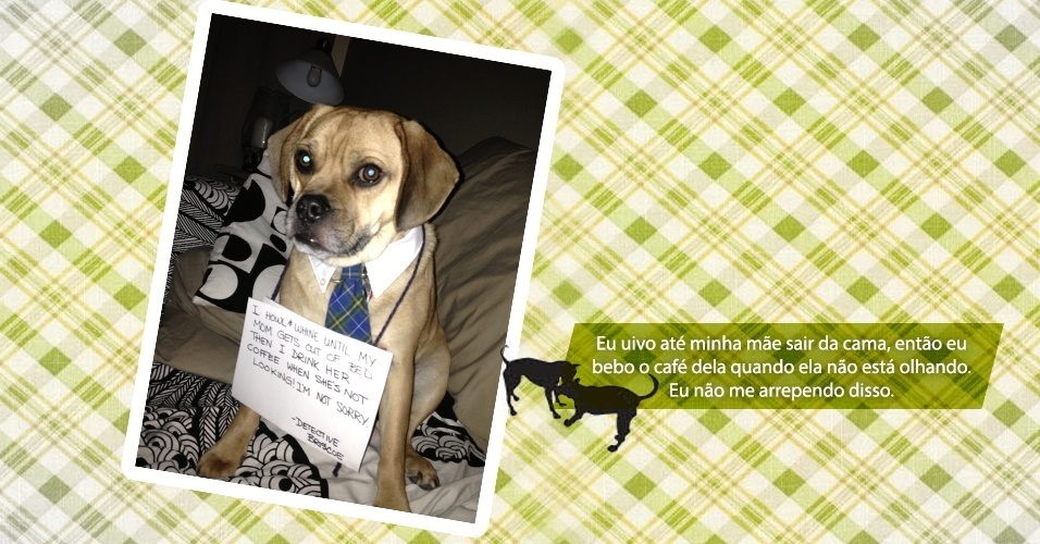 Imagem do site Dog Shaming