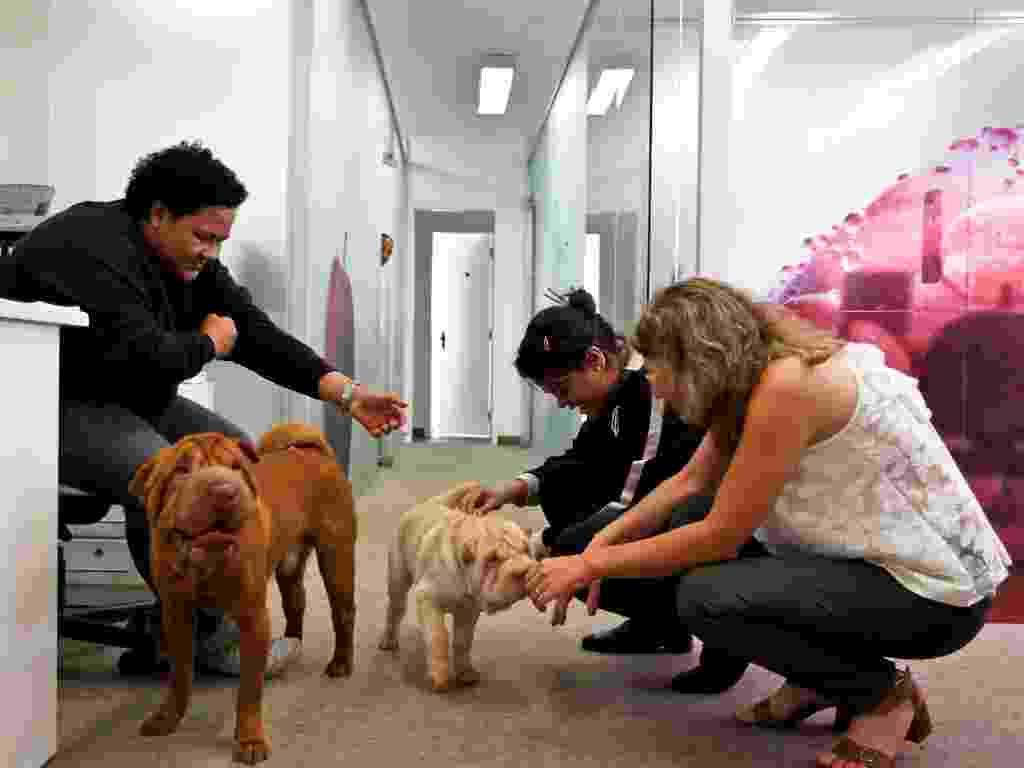 MG 1750 - cães sharpei interagem com as funcionárias do SimGroup em SP, pet day, cães no escritório - Leandro Moraes/UOL