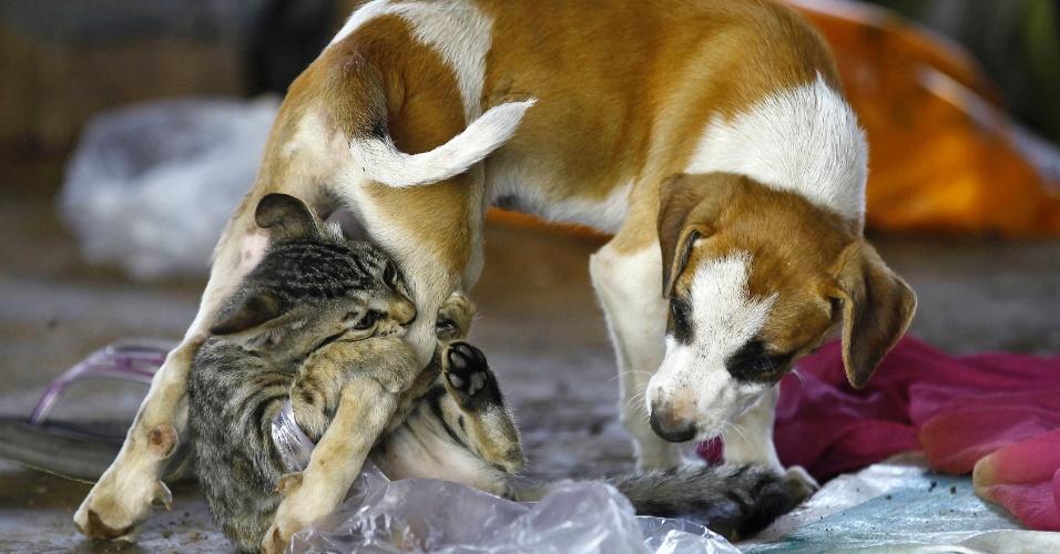 27.nov.2012 - Gato brinca com cachorro debaixo de uma ponte, nesta terça-feira (23) em Mumbai (Índia)