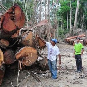 Pequenos assentamentos são alvo do desmatamento promovido por madeireiros ilegais - BBC