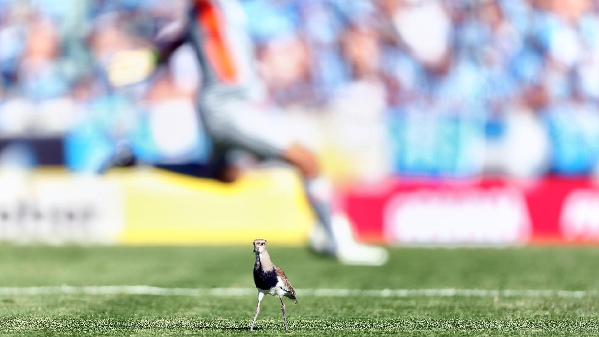 02.dez.2012 - Espectador inusitado, um pássaro fica ao lado do campo de jogo durante o clássico entre Grêmio e Internacional, no estádio Olímpico, em rodada do Brasileirão