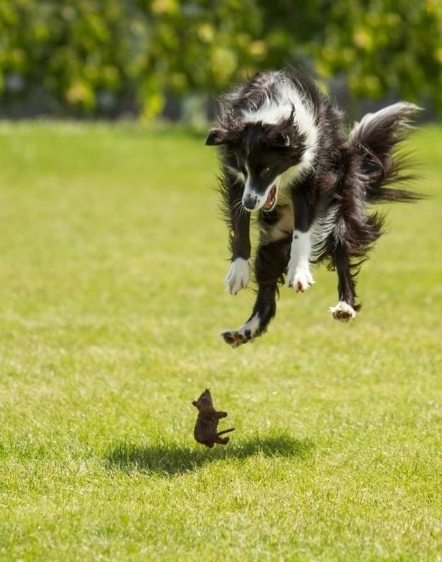 7.dez.2012 - 10 - Foto perfeitamente cronometrada para o rato ser herói