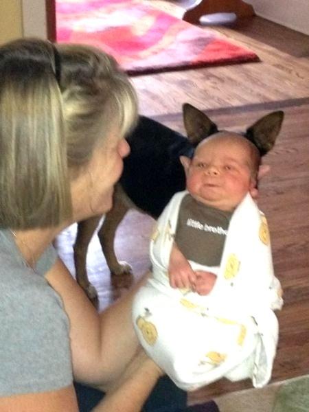 7.dez.2012 - 11 - Melhor foto de bebê Yoda