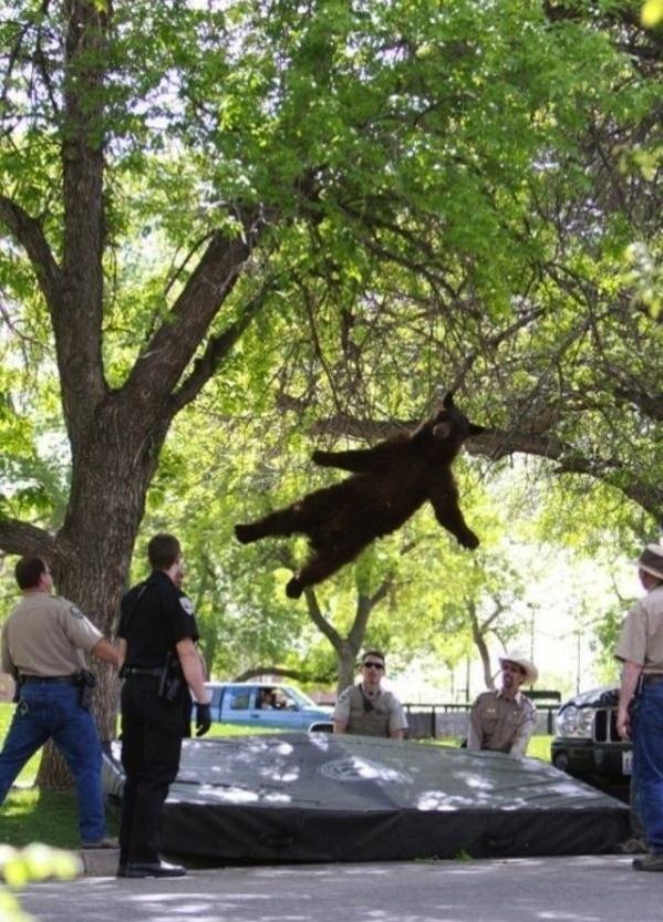 7.dez.2012 - 14 - Queda livre de um urso