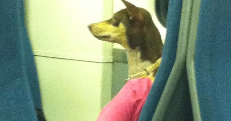 7.dez.2012 - 5 - A melhor cabeça de cão