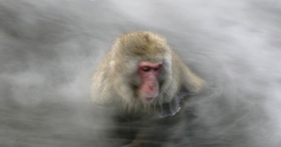 """11.dez.2006 - Macacos-japoneses, conhecidos como """"macacos da neve"""", tomam banho ao ar livre em fonte termal do parque Jigokudani, na cidade de Yamanouchi (Japão). Cerca de 160 animais habitam a área e são atrações turísticas"""