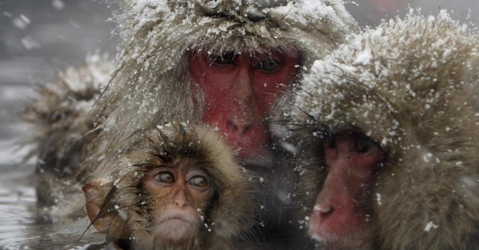 """4.dez.2008 - Macacos-japoneses, conhecidos como """"macacos da neve"""", tomam banho ao ar livre em fonte termal do parque Jigokudani, na cidade de Yamanouchi (Japão). Cerca de 160 animais habitam a área e são atrações turísticas"""