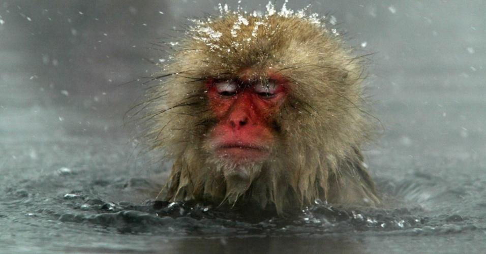 """7.dez.2006 - Macacos-japoneses, conhecidos como """"macacos da neve"""", tomam banho ao ar livre em fonte termal do parque Jigokudani, na cidade de Yamanouchi (Japão). Cerca de 160 animais habitam a área e são atrações turísticas"""