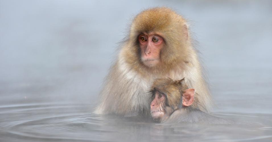 """7.dez.2012 - Macacos-japoneses, conhecidos como """"macacos da neve"""", tomam banho ao ar livre em uma fonte termal, no parque Jigokudani, na cidade de Yamanouchi, em Nagano. Cerca de 160 animais habitam a área e são atrações turísticas"""