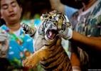WWF-Canon/James Morgan