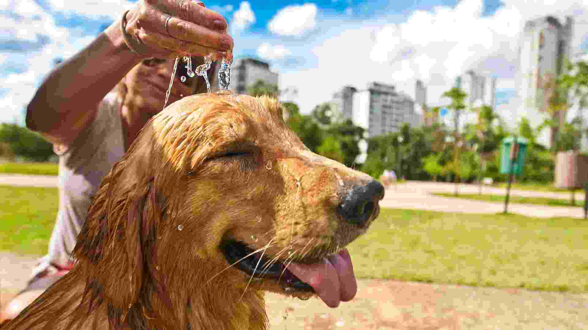 Simone Someg refresca seu golden Nick no Parque do Povo, no Itaim Bibi, em São Paulo - Danilo Verpa/Folhapress