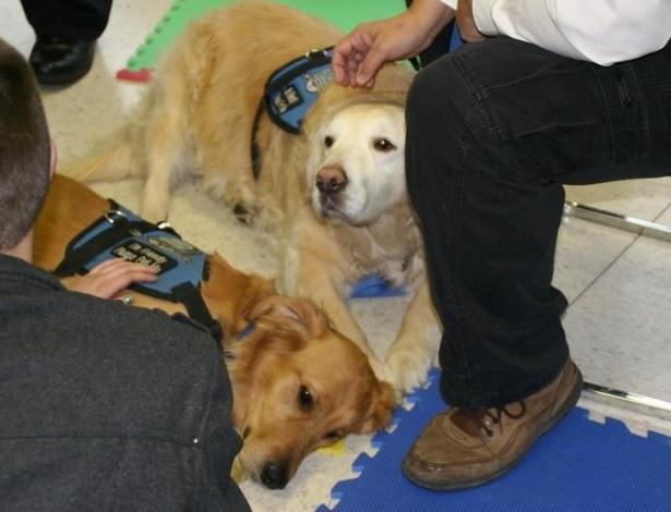 16.dez.2012 - Homens brincam com cães da raça golden retriever na igreja luterana da cidade de Newton (EUA). Os cães, do projeto da Igreja Luterana de Illinois