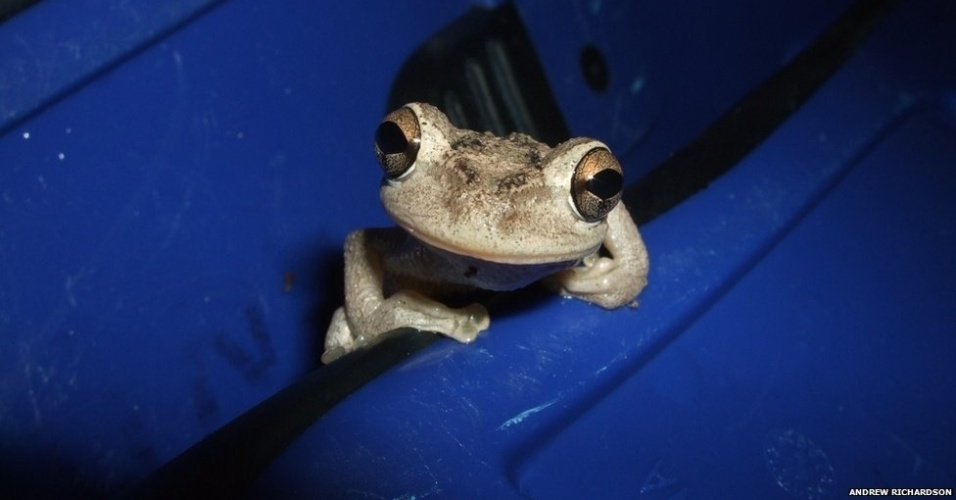 18.dez.2012 - Sociedade Ecológica Britânica premia as melhores fotos de natureza do ano
