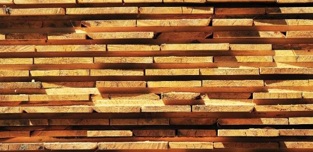 A madeira certificada pode tanto vir de plantações florestais ou de florestas naturais como a Amazônia - Getty Images