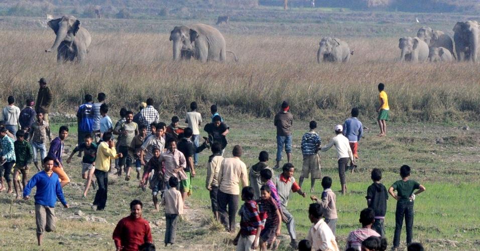 22.dez.2012 - Indianos são surpreendidos por manada de elefantes selvagens em Kurkuria. Ao menos 20 animais invadiram fazendas da região em busca de alimentos