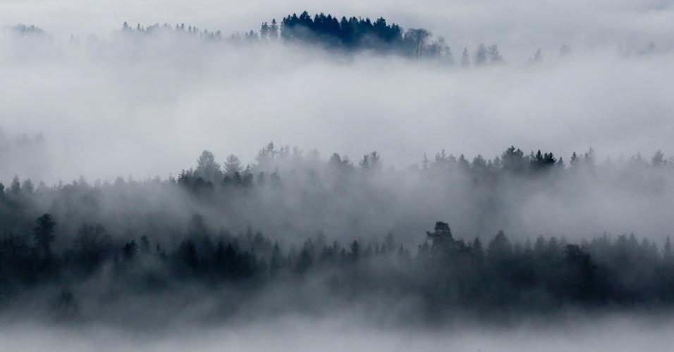 22.dez.2012 - Neblina cobre flores na região de Aaretal, perto de Berna, capital da Suíça