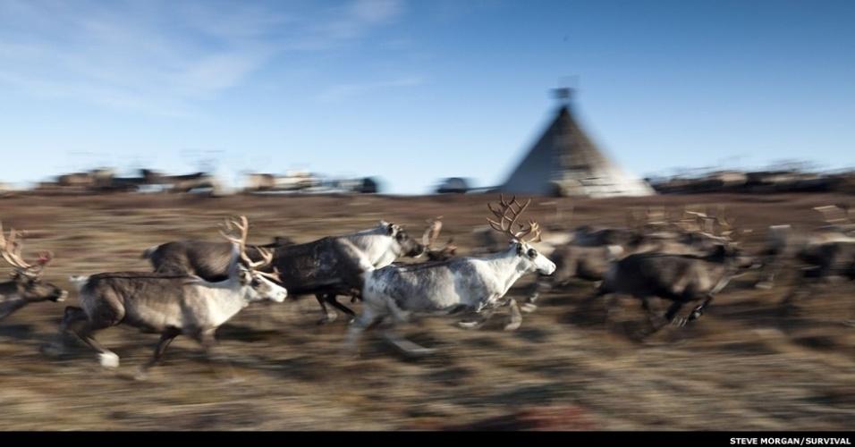 24.dez.2012 - Ambientalistas tentam salvar tribos de pastores de renas